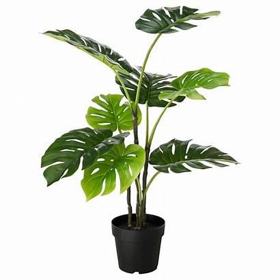 Plant Potted Fejka Artificial Ikea Monstera Indoor