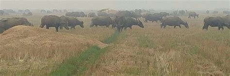 hari pangan sedunia  sumatera selatan umbi  susu