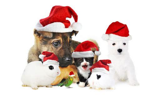 holiday household pet tips petswelcomecom