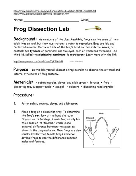Frog External Anatomy Of The Lab Answers