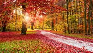 Kostenlose Bilder Herbst : bunter herbst nasser herbst andreas krappweis photography ~ Yasmunasinghe.com Haus und Dekorationen
