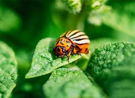 How To Get Rid Of June Bugs On My Porch by How To Get Rid Of June Bugs 4 Ways To Save Your