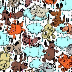 raining cats  dogs definition origin examples
