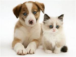 Cute Pictures of Puppies and Kittens Together Pets World