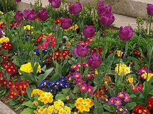 Pflanzkörbe Für Blumenzwiebeln : themen der 23 gartenseminare f r hobbyg rtner mit veronika ~ Lizthompson.info Haus und Dekorationen