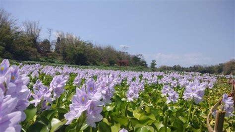 kalinampu natural park destinasi wisata ala jepang