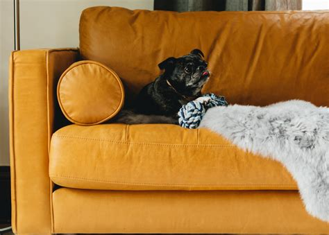 dog friendly sofa fabric pet friendly leather sofa how to a pet friendly home