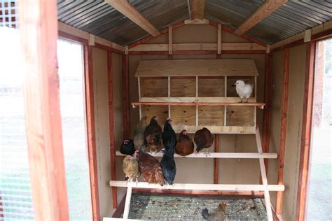 chicken coop  design  pet chick