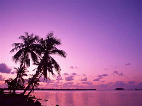 wallpaper pemandangan pemandangan ungu