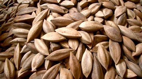 pili oil   main ingredient   filipino skincare