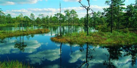 enchanting beauty  estonia