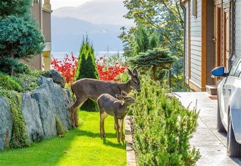 how to keep deer out of your garden how to keep deer out of a garden bob vila