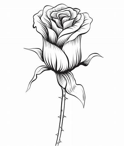 Rose Coloring Pages Drawing Pencil Flower Sketch