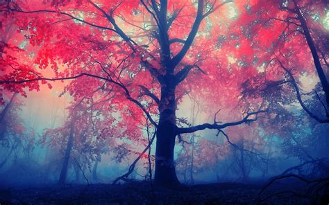 awesome autumn full hd fondo de pantalla  fondo de