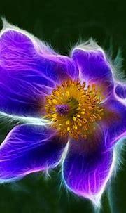 Nature ART flowers cats fractal colors wallpaper wallpaper ...