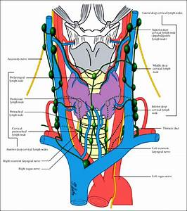 Classification Of Neck Dissections  An Evolving System