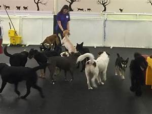 dog daycare happy hound dog resorts With dog boarding and grooming