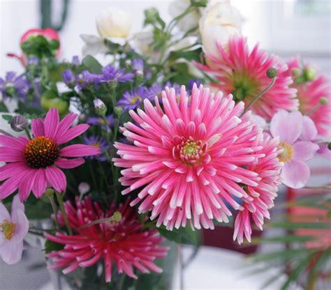 Die Schönsten Blumen Für Den Garten by Schnittblumen In Den Garten Pflanzen
