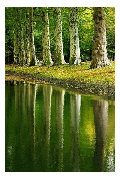 Trees Reflections Water Reflection Nature Landscape Stream