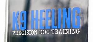 precision dog training k9 heeling With precision dog training