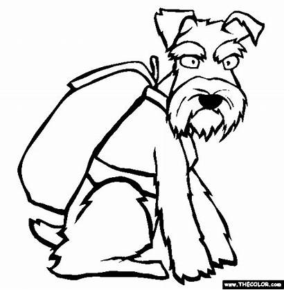 Schnauzer Coloring Pages Miniature Dogs Schnauzers Clipart
