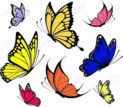 Butterfly Butterflies Vector Illustration Individual Clipart Clip