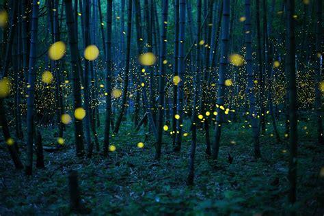 Capturing The Enchanting Beauty Fireflies Night