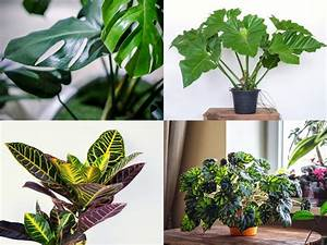 27, Tropical, U0026, Exotic, House, Plants, You, Should, Grow, In, Your, Home