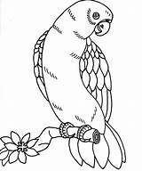 Coloring Bird Tropical Parrot Realistic Printable Getcolorings Col sketch template