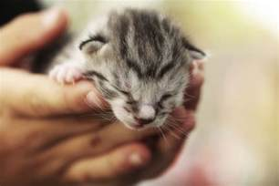 cats and kittens fading kitten causes and symptoms