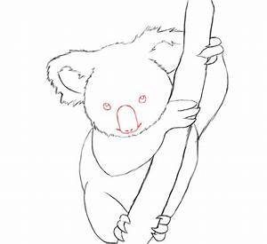 How To Draw A Koala - Draw Central