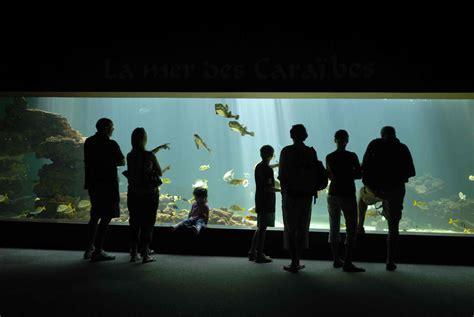la visite guid 201 e de l aquarium aquarium de vend 233 e