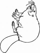 Beaver Coloring Pages Print Animal Printable Recommended sketch template