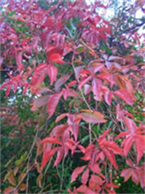 Common Climbing Plants Found In The Uk