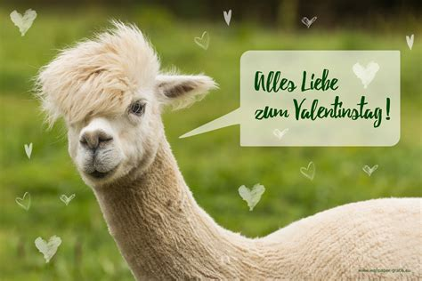 tiere wuenschen alles liebe zum valentinstag