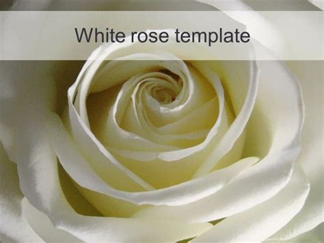 white rose powerpoint template