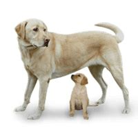 baby dog puppy picture baby animals learning  kids
