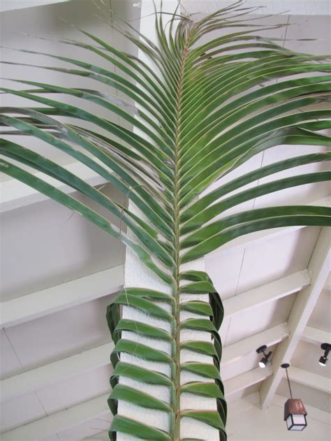tropical decorating idea wrap palm frond  post