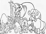 Coloring Pages Zoo Animal Printable Popular sketch template