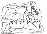 Pond Coloring Frog Pages Colouring Cycle Clipart Cyles Lilypad Print Polly Pocket Drawings Popular sketch template