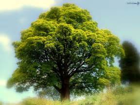 free wallpaper best tree nature wallpaper