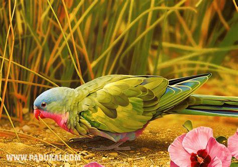win min beautiful birds fish animals photography