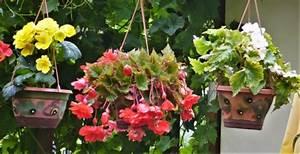 Blumen Für Schattigen Balkon : knollenbegonie eine sch nheit f r den schattigen balkon ~ Orissabook.com Haus und Dekorationen