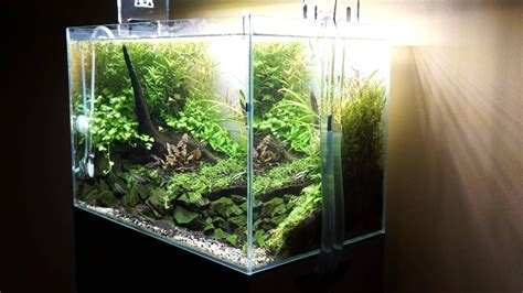 Aquascape Tree by Aquascape Quot Tree Quot A Green World Forms