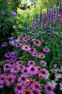 echinacea purpu... Hyssop Quotes