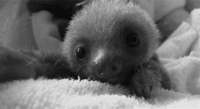 Sloth Animals Sloths Animated Funny Kawaii Animal