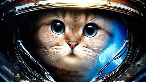 Space Cat Wallpaper Wallpapersafari