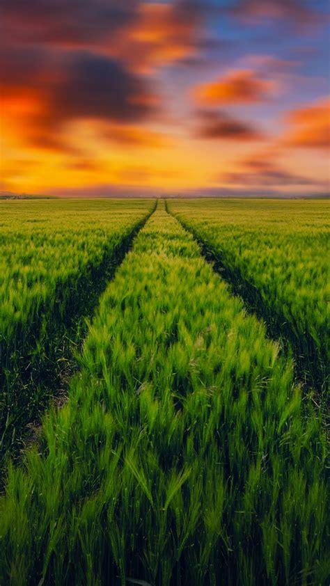 wallpaper grass field green grass sunset landscape