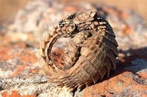 Top 10 Coolest, Weirdest Lizards