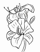 Lily Coloring Flower Pages Easter Drawing Printables Printable Line Template Pdf Drawings Samanthasbell Clipartmag Paintingvalley Continue Reading Categories sketch template